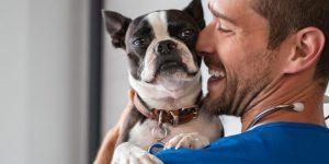 Pourquoi opter pour une assurance santé animale